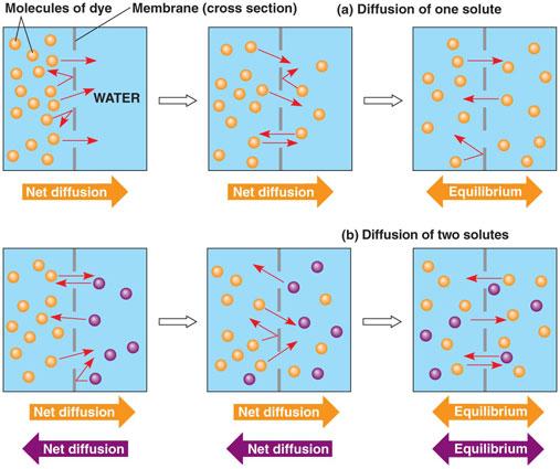 Hasil gambar untuk difusi